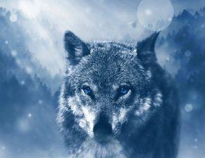 internet come il lupo cattivo da cui difendere i minori